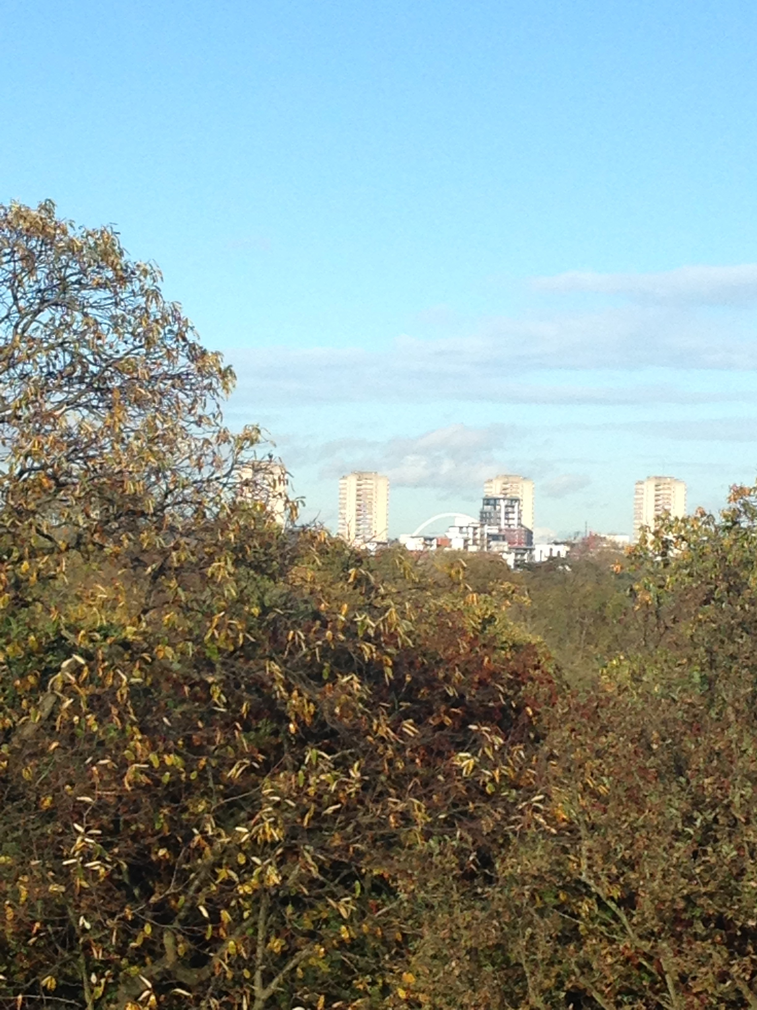 Treetop_walk_London